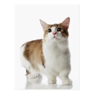 Cat with short feet postcard
