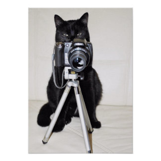 Cat with the camera poster
