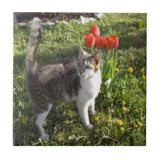 Cat With Tulips Tile