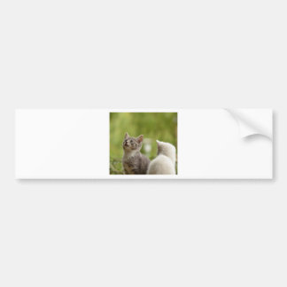 Cat Young Animal Curious Wildcat Animal Nature Bumper Sticker