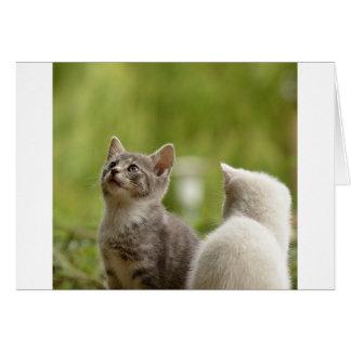 Cat Young Animal Curious Wildcat Animal Nature Card