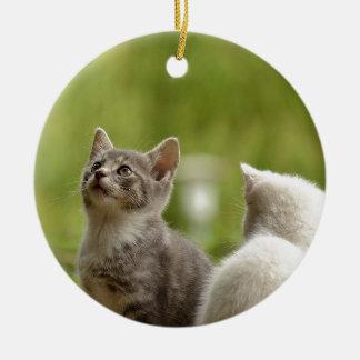 Cat Young Animal Curious Wildcat Animal Nature Ceramic Ornament
