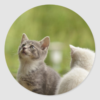 Cat Young Animal Curious Wildcat Animal Nature Classic Round Sticker