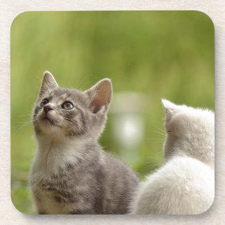 Cat Young Animal Curious Wildcat Animal Nature Coaster