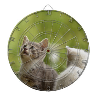 Cat Young Animal Curious Wildcat Animal Nature Dartboard