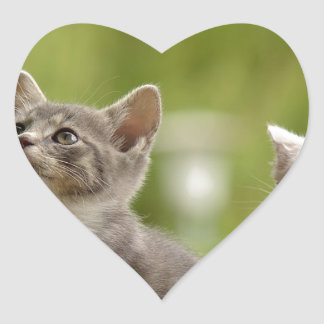 Cat Young Animal Curious Wildcat Animal Nature Heart Sticker