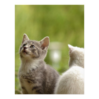 Cat Young Animal Curious Wildcat Animal Nature Letterhead