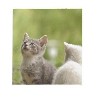 Cat Young Animal Curious Wildcat Animal Nature Notepad