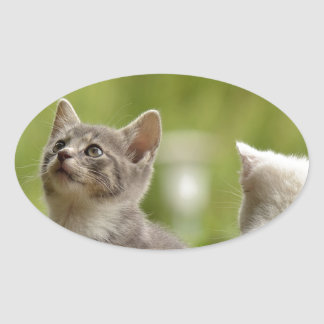 Cat Young Animal Curious Wildcat Animal Nature Oval Sticker