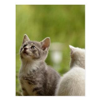Cat Young Animal Curious Wildcat Animal Nature Postcard