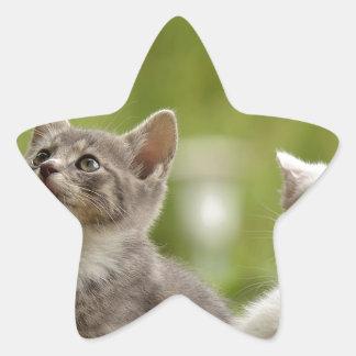 Cat Young Animal Curious Wildcat Animal Nature Star Sticker