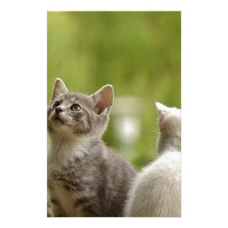 Cat Young Animal Curious Wildcat Animal Nature Stationery
