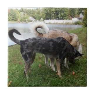 Catahoula Leopard Dog and Ausky Dog Sniffing Tile