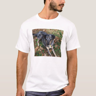 Catahoula Leopard Dog Laying Down T-Shirt