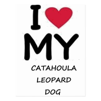 catahoula leopard dog postcard