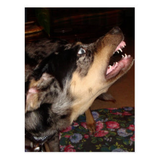 Catahoula Leopard Dog Showing Teeth Postcard