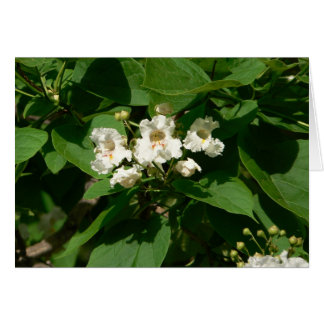 Catalpa Blossom Card