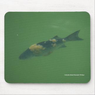 Catawba Island Barnacle Walleye Mouse Pad