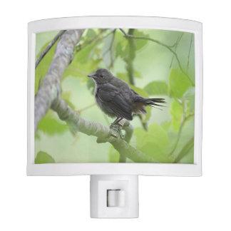 Catbird fledgling nite lite