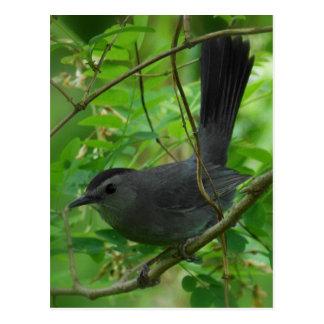 Catbird Postcard