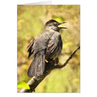 Catbird Singing His Song Blank Card