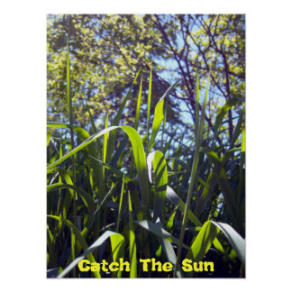 Catch The Sun Poster
