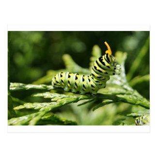 Caterpillar 2012 postcard