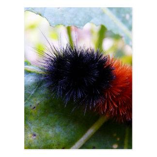 Caterpillar Devours Garden Leaves Postcard