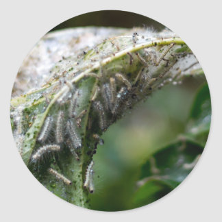 Caterpillar Hatch Cocoon Rain Fall Classic Round Sticker