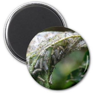 Caterpillar Hatch Cocoon Rain Fall Magnet