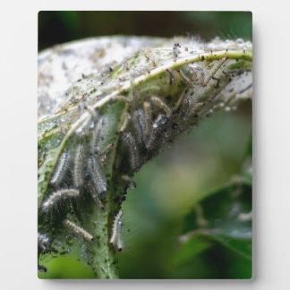 Caterpillar Hatch Cocoon Rain Fall Plaque