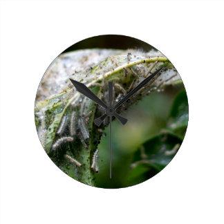 Caterpillar Hatch Cocoon Rain Fall Round Clock