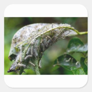 Caterpillar Hatch Cocoon Rain Fall Square Sticker
