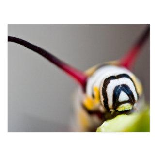 Caterpillar Macro Postcard