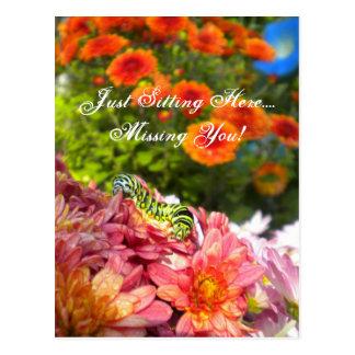 Caterpillar Missing You postcard