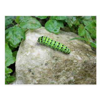 Caterpillar On Rock Postcard