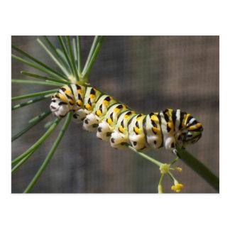 Caterpillar Postcard