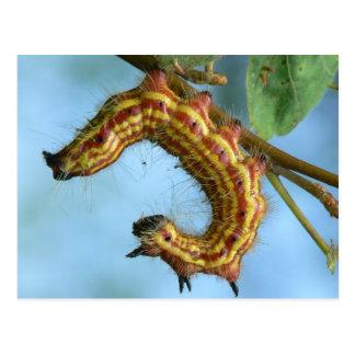 Caterpillar Postcard. Postcard