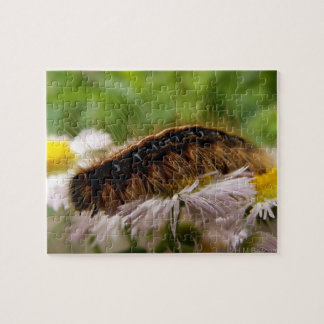 Caterpillar Puzzle Avec Photo