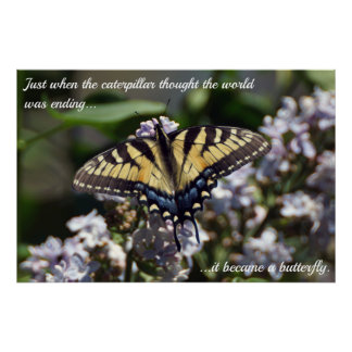 Caterpillar To Butterfly Tiger Swallowtail Poster