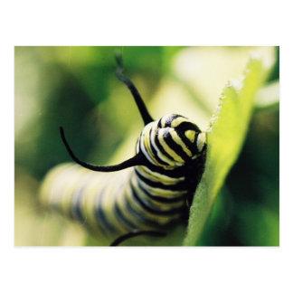 Caterpillar Up Close and Personal Postcard