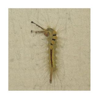 Caterpillar, Wood Photo Print