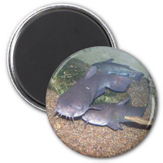 Catfish fishing zoo magnet
