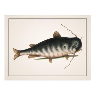 Catfish Postcard - Style I