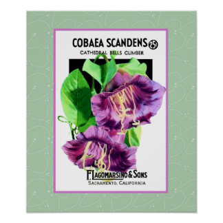 Cathedral Climber Flowers Poster