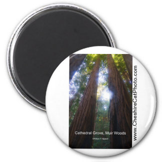 Cathedral Grove, Muir Woods California Products Magnet