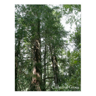 Cathedral Grove - postcard