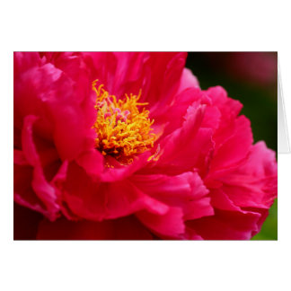 Cathy's Bush Peonie 2  2013 Card