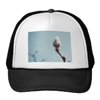 Catkin winter Willow Tree Trucker Hat