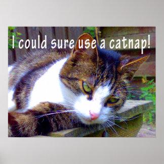 Catnap Cat Poster